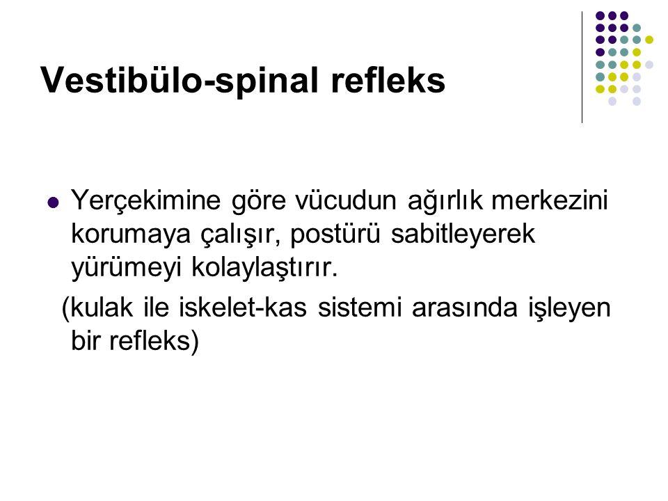 Vestibülo-spinal refleks