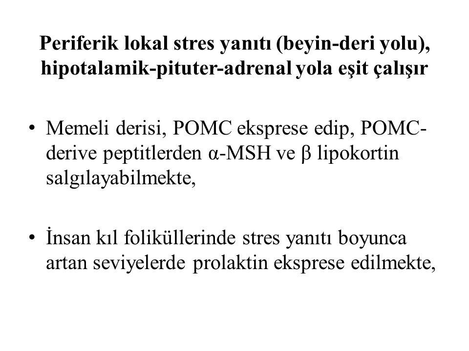 Periferik lokal stres yanıtı (beyin-deri yolu), hipotalamik-pituter-adrenal yola eşit çalışır