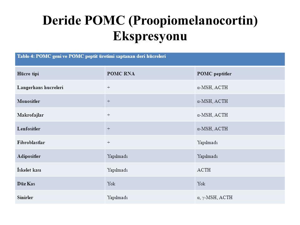 Deride POMC (Proopiomelanocortin) Ekspresyonu