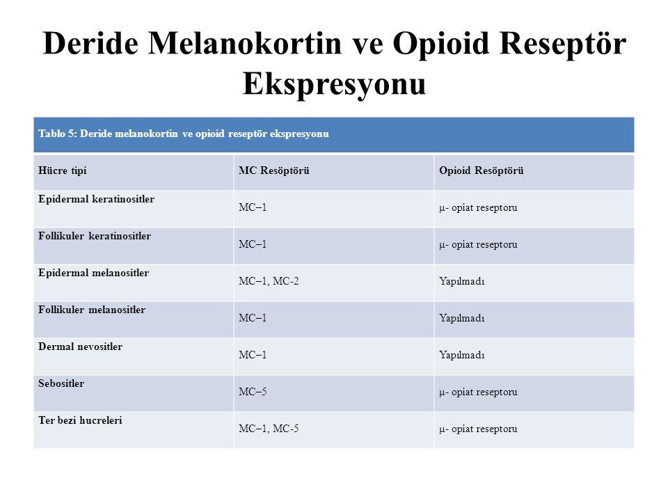 Deride Melanokortin ve Opioid Reseptör Ekspresyonu