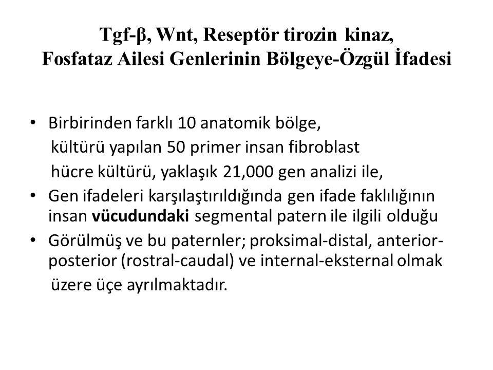 Tgf-β, Wnt, Reseptör tirozin kinaz, Fosfataz Ailesi Genlerinin Bölgeye-Özgül İfadesi