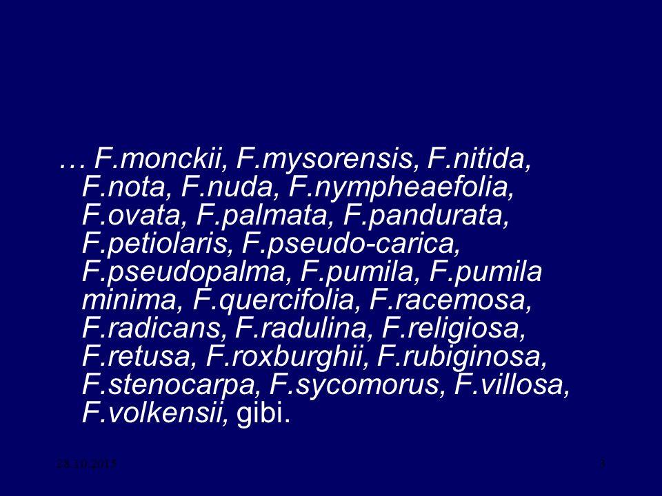 … F. monckii, F. mysorensis, F. nitida, F. nota, F. nuda, F