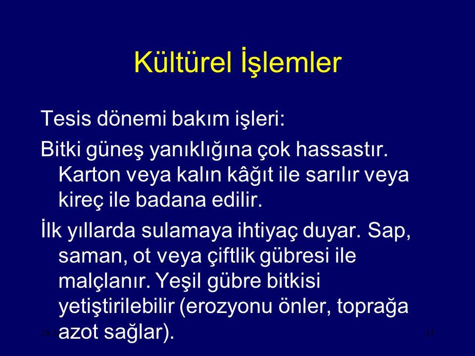 Kültürel İşlemler Tesis dönemi bakım işleri: