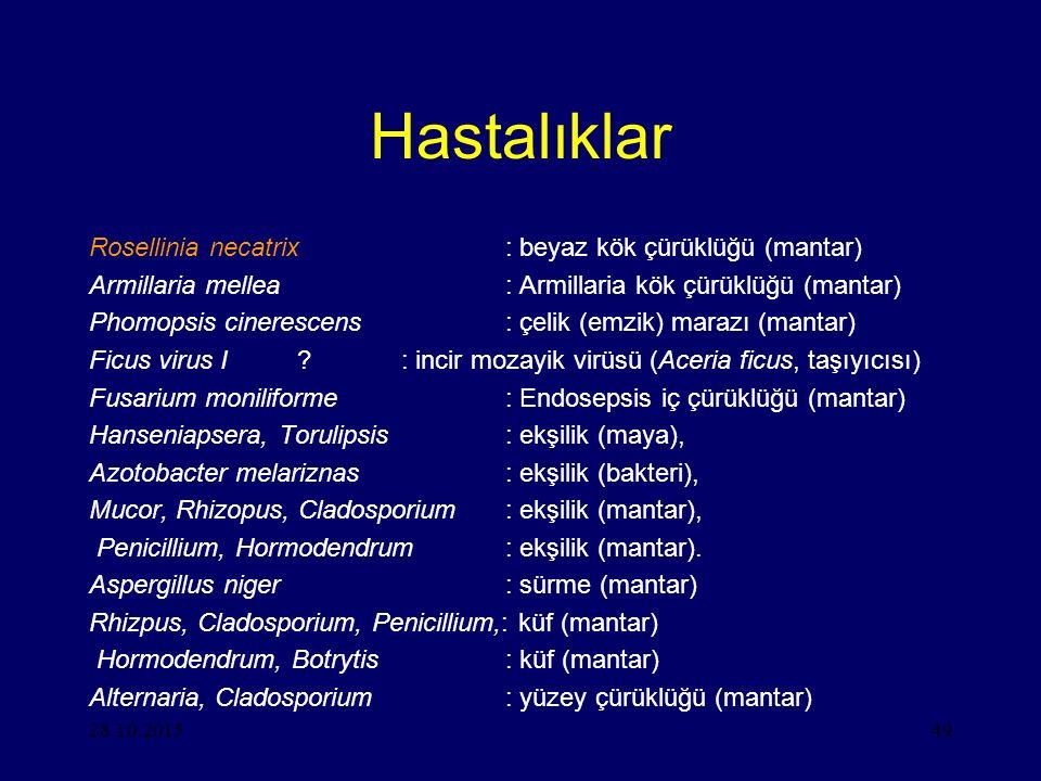 Hastalıklar Rosellinia necatrix : beyaz kök çürüklüğü (mantar)