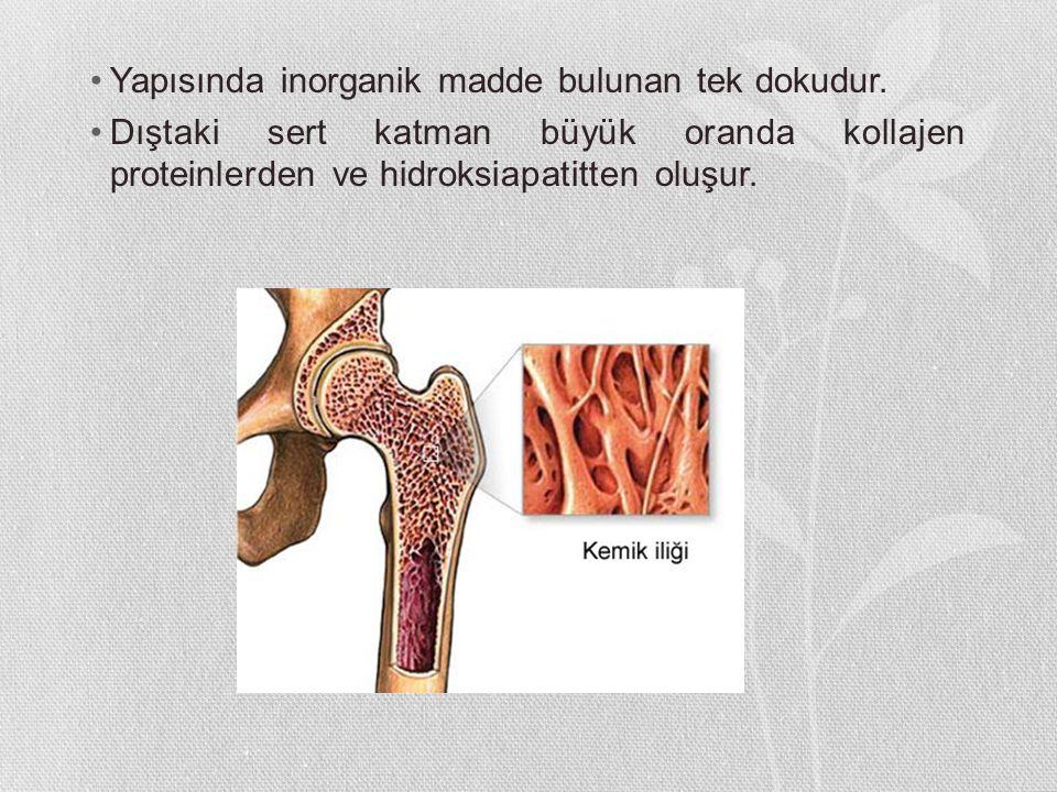 Yapısında inorganik madde bulunan tek dokudur.