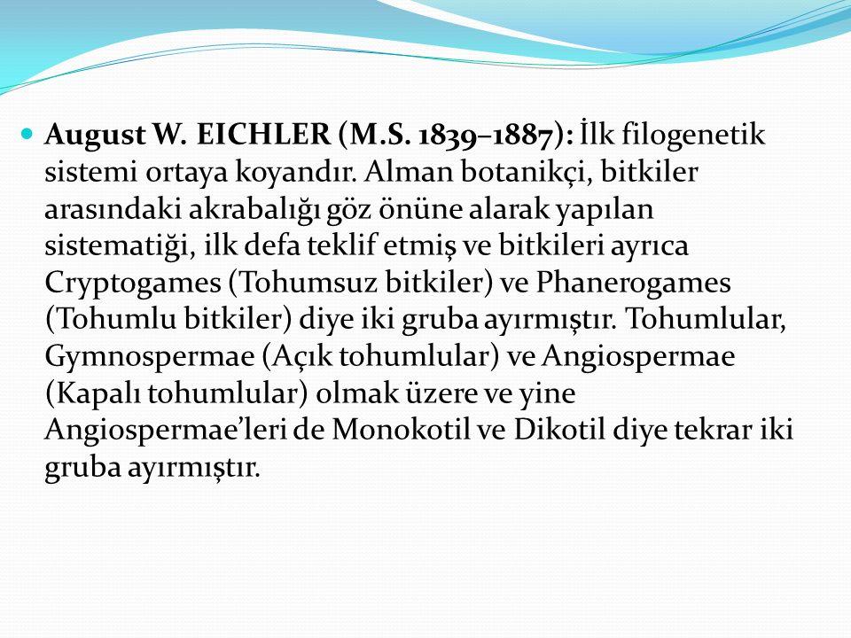August W. EICHLER (M.S. 1839–1887): İlk filogenetik sistemi ortaya koyandır.
