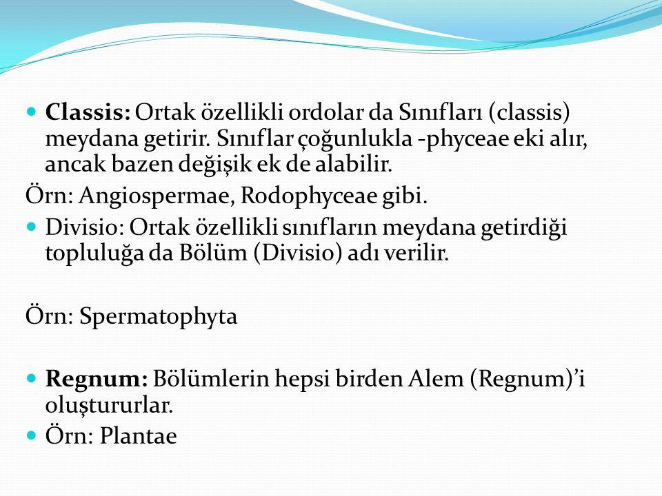 Classis: Ortak özellikli ordolar da Sınıfları (classis) meydana getirir. Sınıflar çoğunlukla -phyceae eki alır, ancak bazen değişik ek de alabilir.