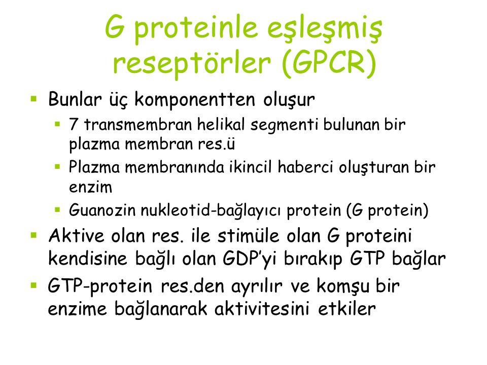 G proteinle eşleşmiş reseptörler (GPCR)