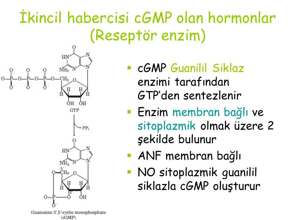 İkincil habercisi cGMP olan hormonlar (Reseptör enzim)