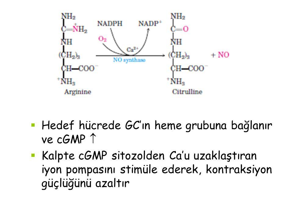 Hedef hücrede GC'ın heme grubuna bağlanır ve cGMP 