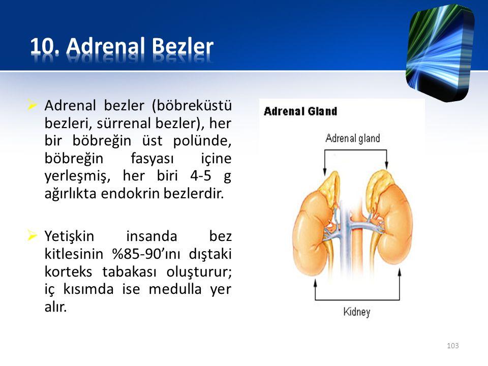 10. Adrenal Bezler