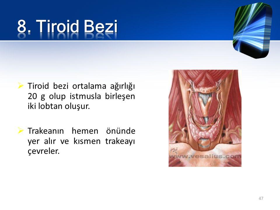 8. Tiroid Bezi Tiroid bezi ortalama ağırlığı 20 g olup istmusla birleşen iki lobtan oluşur.
