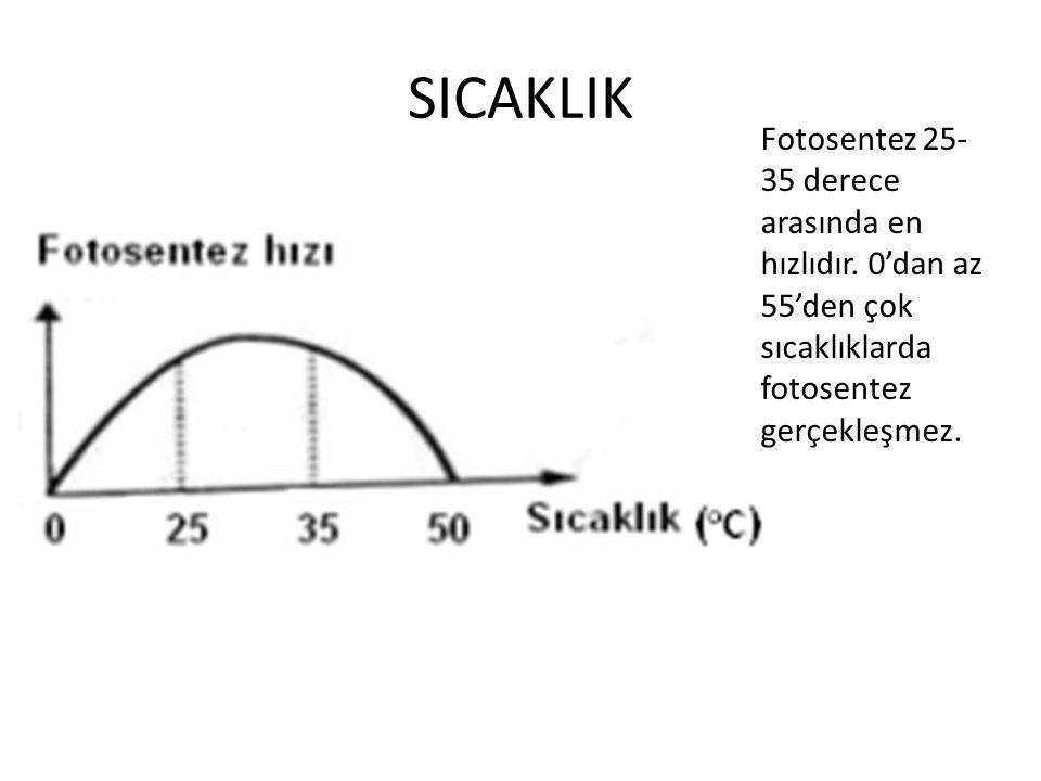 SICAKLIK Fotosentez 25-35 derece arasında en hızlıdır.