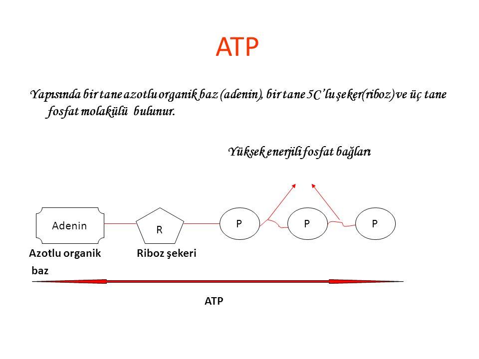 ATP Yapısında bir tane azotlu organik baz (adenin), bir tane 5C'lu şeker(riboz) ve üç tane fosfat molakülü bulunur.