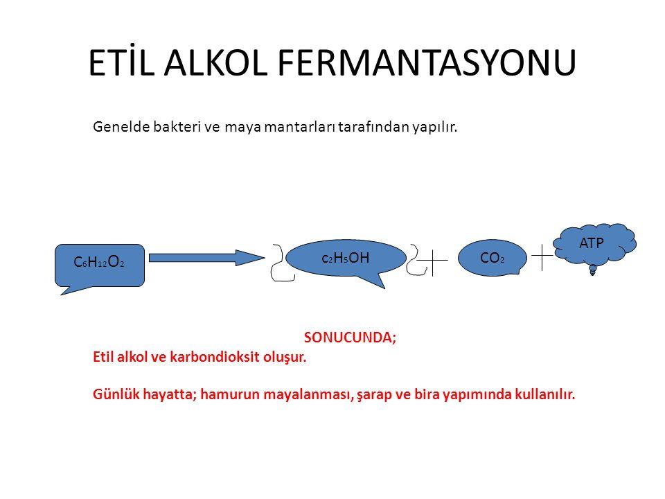 ETİL ALKOL FERMANTASYONU