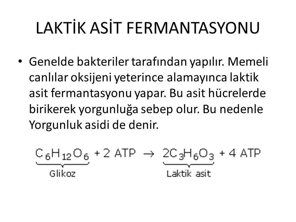 LAKTİK ASİT FERMANTASYONU