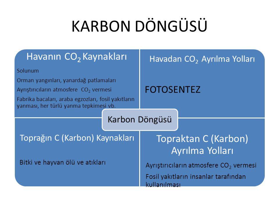 KARBON DÖNGÜSÜ Havanın CO2 Kaynakları