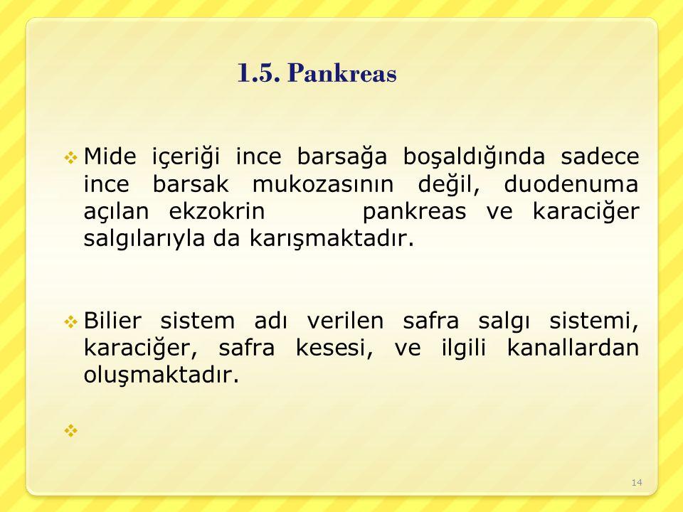1.5. Pankreas