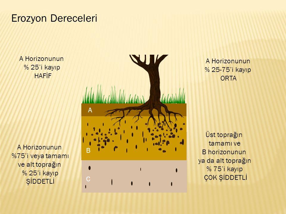 Erozyon Dereceleri A Horizonunun A Horizonunun % 25'i kayıp