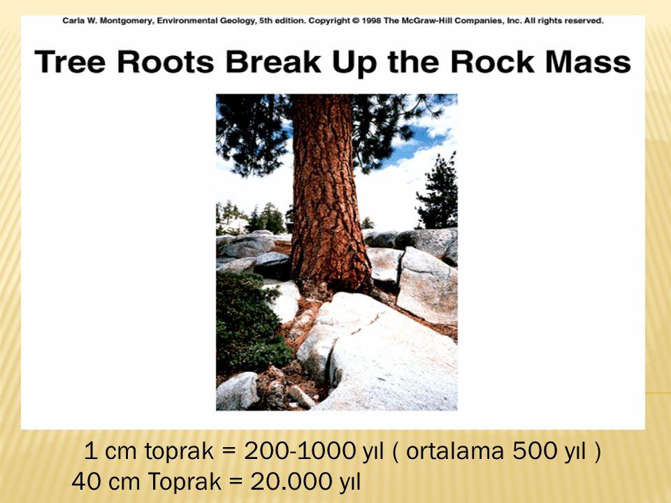 1 cm toprak = 200-1000 yıl ( ortalama 500 yıl )