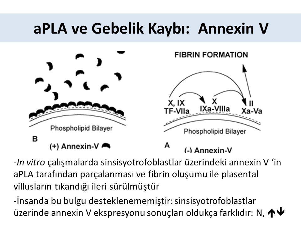 aPLA ve Gebelik Kaybı: Annexin V