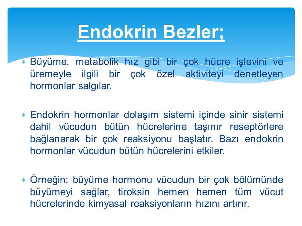Endokrin Bezler; Büyüme, metabolik hız gibi bir çok hücre işlevini ve üremeyle ilgili bir çok özel aktiviteyi denetleyen hormonlar salgılar.