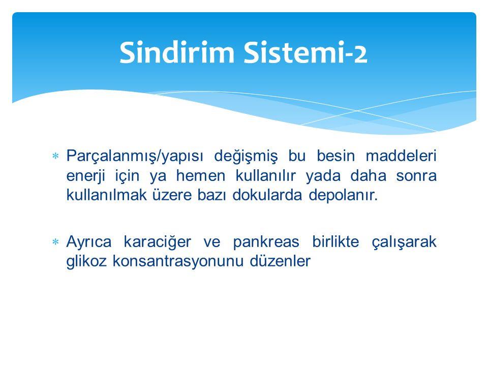 Sindirim Sistemi-2