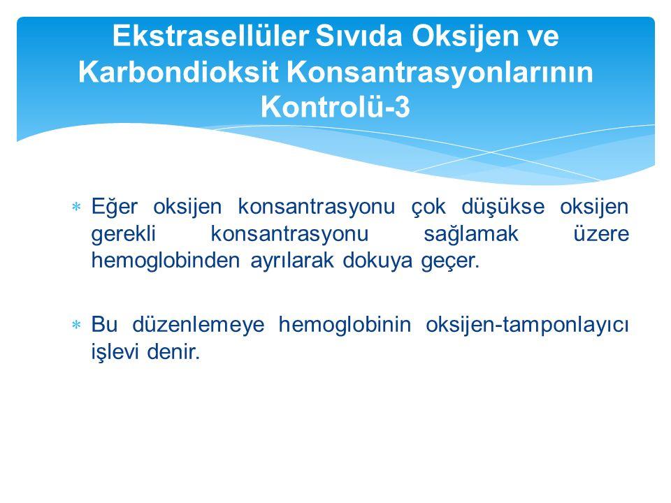 Ekstrasellüler Sıvıda Oksijen ve Karbondioksit Konsantrasyonlarının Kontrolü-3