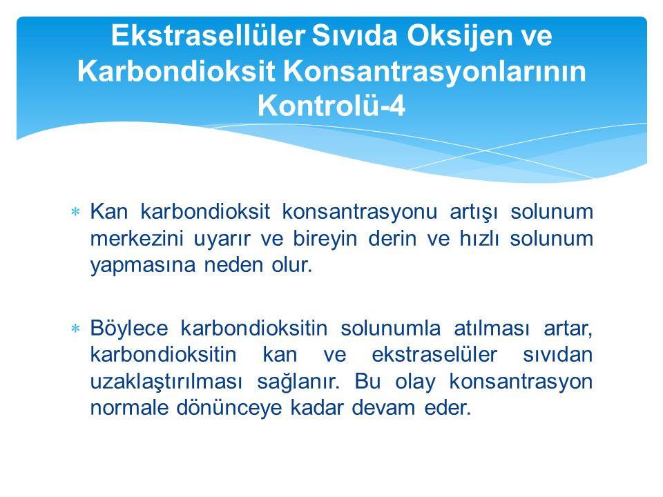 Ekstrasellüler Sıvıda Oksijen ve Karbondioksit Konsantrasyonlarının Kontrolü-4