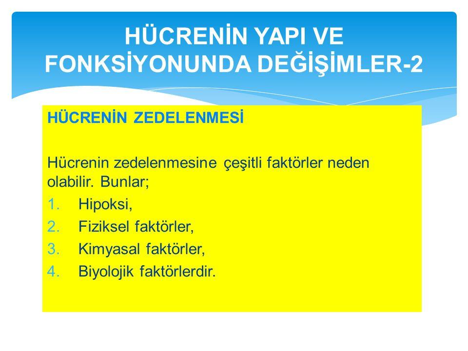 HÜCRENİN YAPI VE FONKSİYONUNDA DEĞİŞİMLER-2