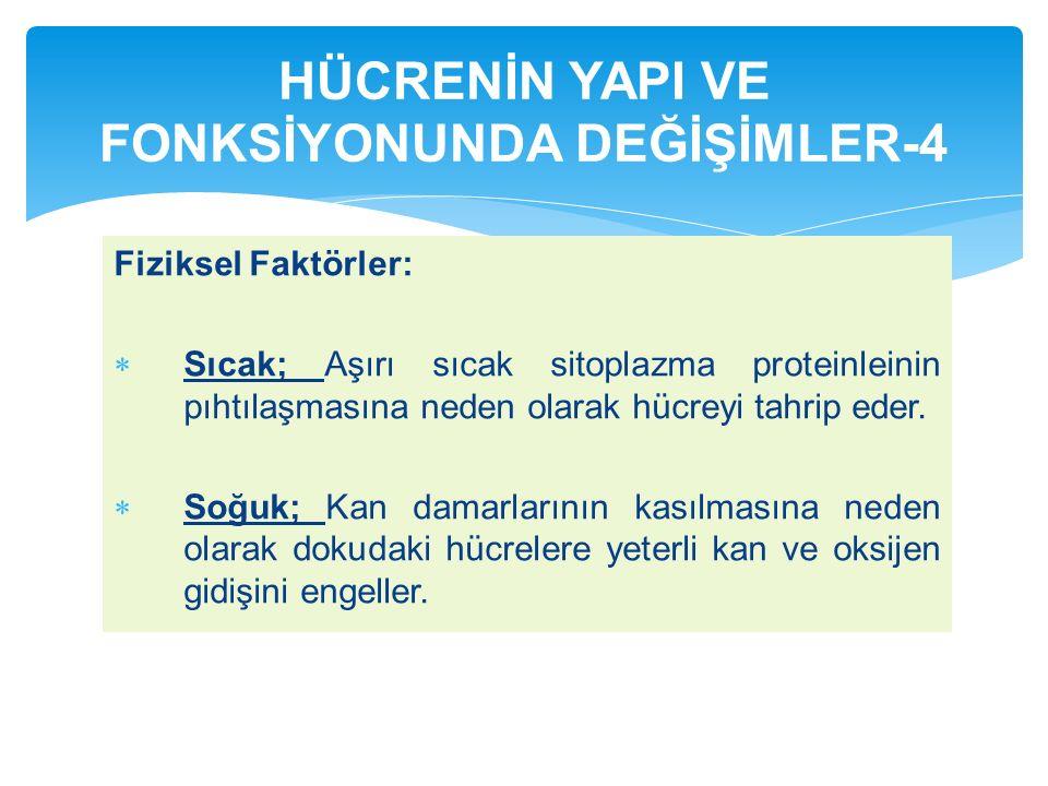 HÜCRENİN YAPI VE FONKSİYONUNDA DEĞİŞİMLER-4