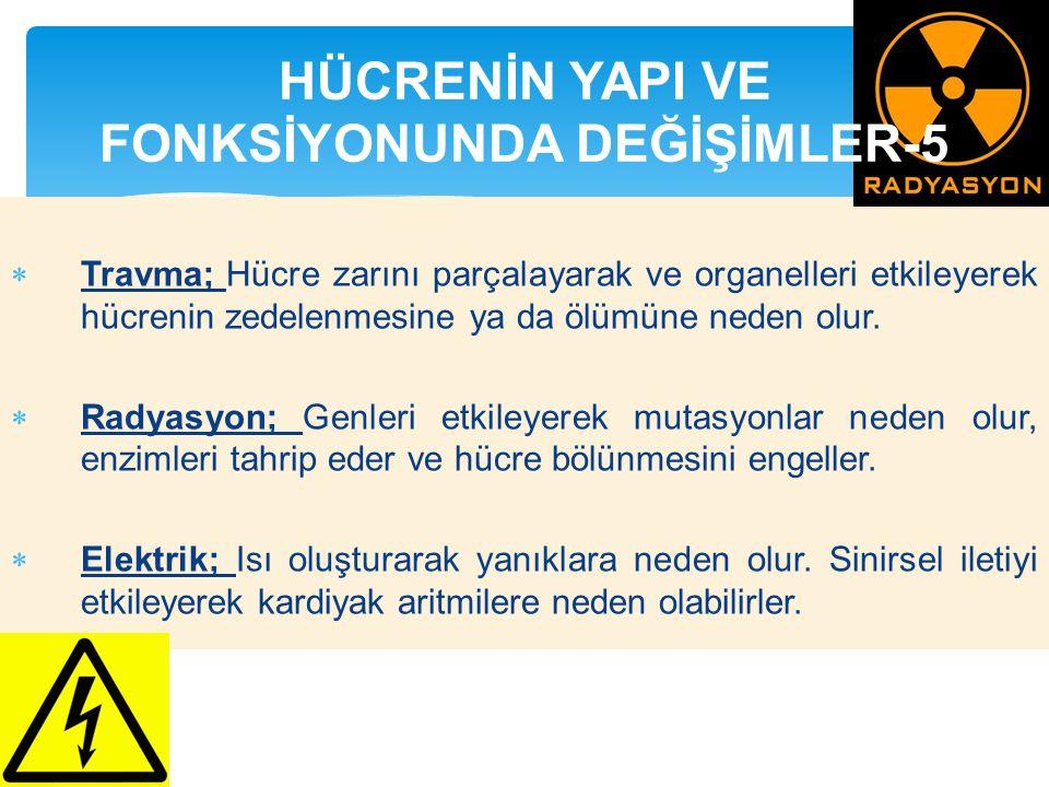 HÜCRENİN YAPI VE FONKSİYONUNDA DEĞİŞİMLER-5