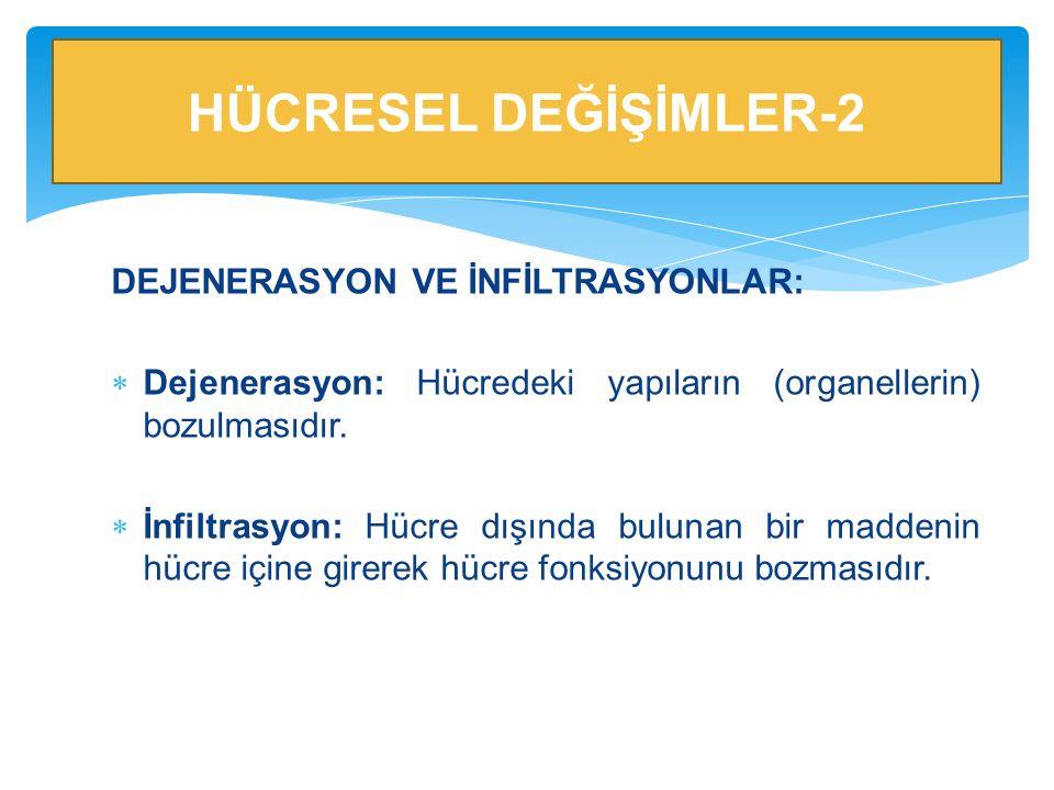 HÜCRESEL DEĞİŞİMLER-2 DEJENERASYON VE İNFİLTRASYONLAR:
