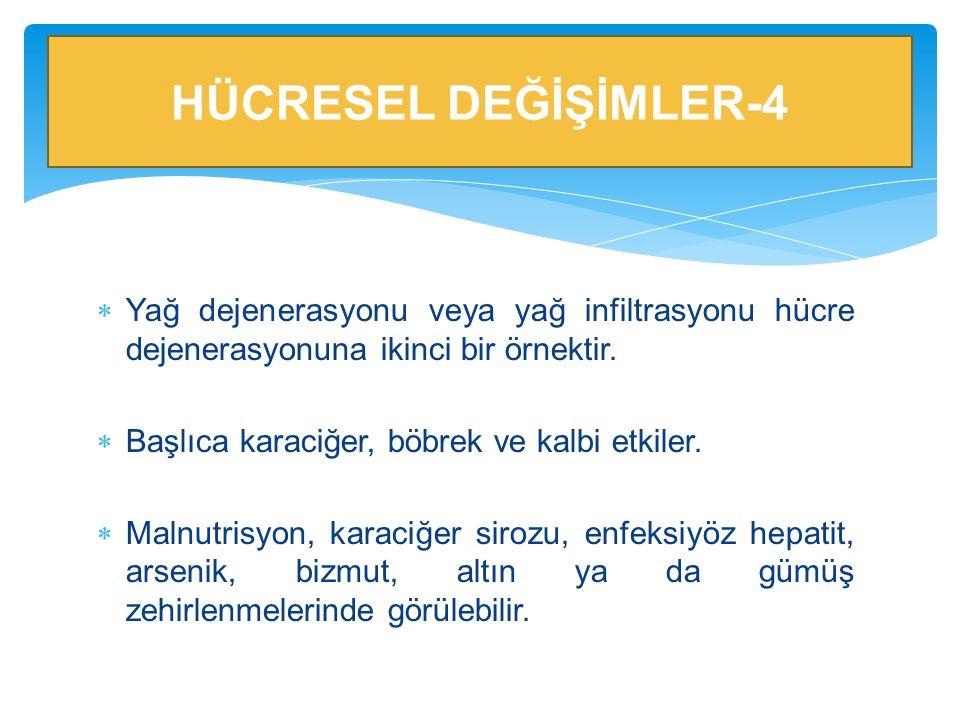 HÜCRESEL DEĞİŞİMLER-4 Yağ dejenerasyonu veya yağ infiltrasyonu hücre dejenerasyonuna ikinci bir örnektir.