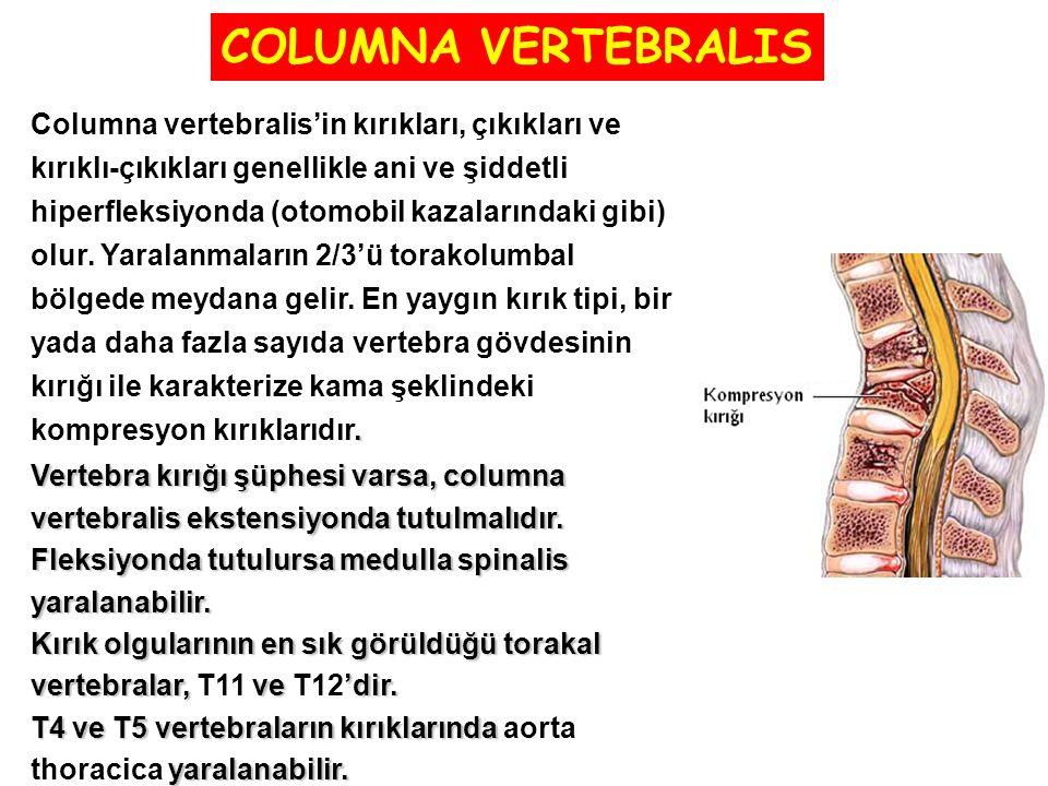 COLUMNA VERTEBRALIS Columna vertebralis'in kırıkları, çıkıkları ve