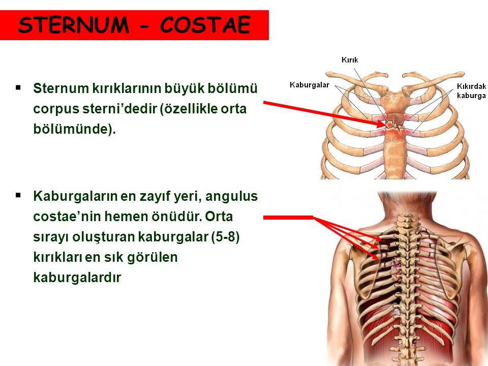 STERNUM - COSTAE Sternum kırıklarının büyük bölümü corpus sterni'dedir (özellikle orta bölümünde).