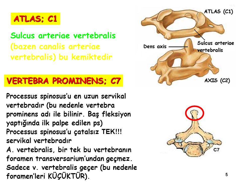 Sulcus arteriae vertebralis (bazen canalis arteriae