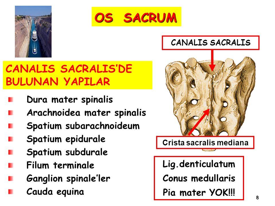Crista sacralis mediana