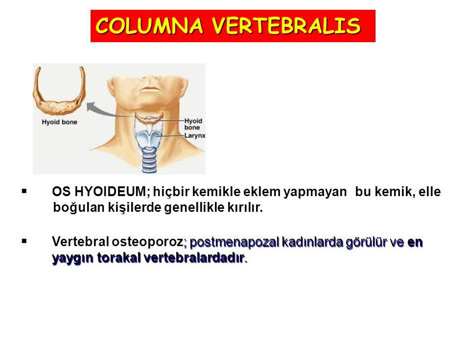 COLUMNA VERTEBRALIS OS HYOIDEUM; hiçbir kemikle eklem yapmayan bu kemik, elle. boğulan kişilerde genellikle kırılır.