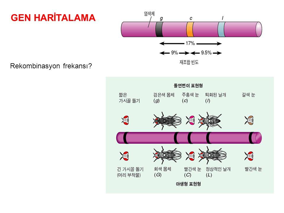 GEN HARİTALAMA Rekombinasyon frekansı