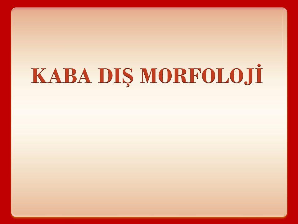 KABA DIŞ MORFOLOJİ