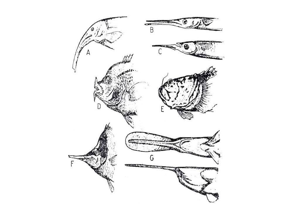 Balıklardaki ağız yapıları
