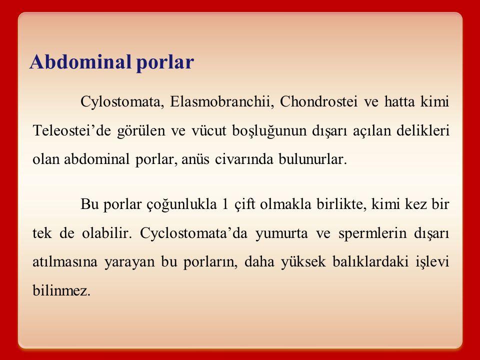 Abdominal porlar