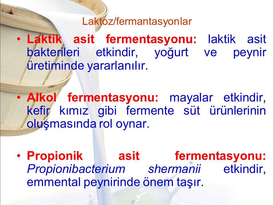 Laktoz/fermantasyonlar