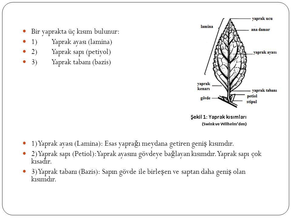 Bir yaprakta üç kısım bulunur: