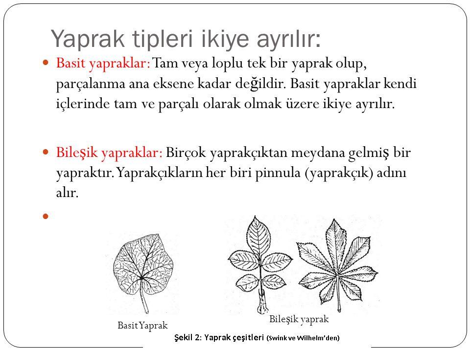 Yaprak tipleri ikiye ayrılır: