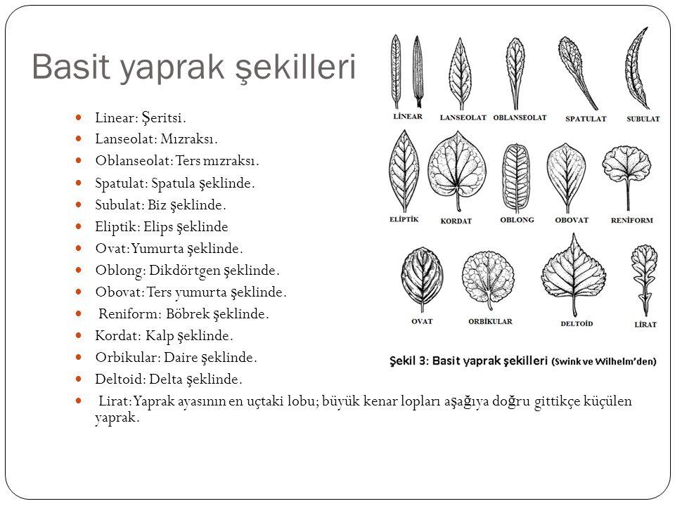 Basit yaprak şekilleri