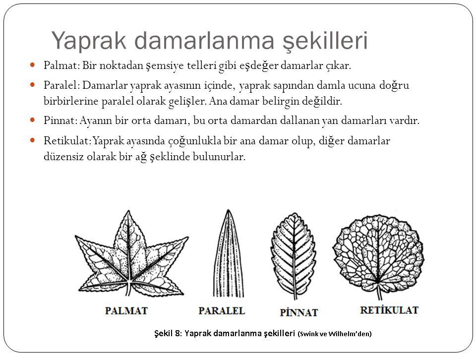 Yaprak damarlanma şekilleri