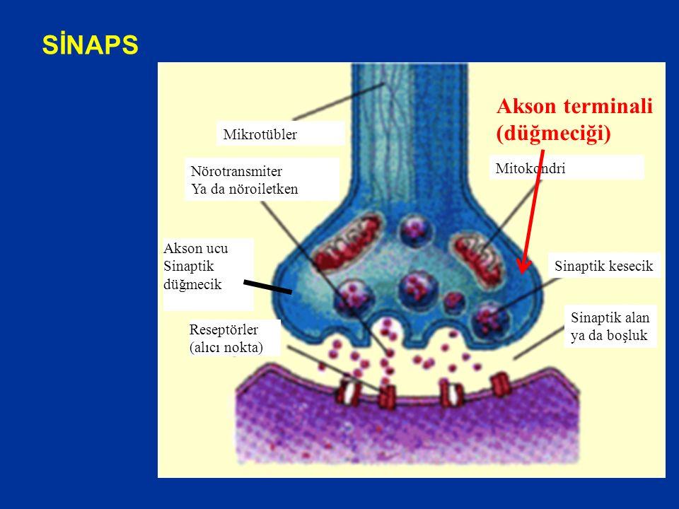 SİNAPS Akson terminali (düğmeciği) Mikrotübler Mitokondri