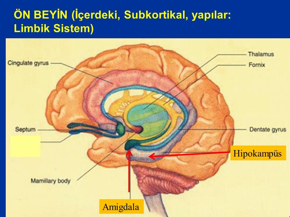 ÖN BEYİN (İçerdeki, Subkortikal, yapılar: Limbik Sistem)
